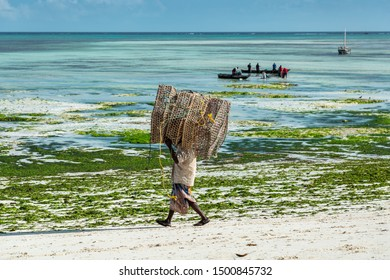 Man with big crab trap walking on a beach with green seaweed at Zanzibar island