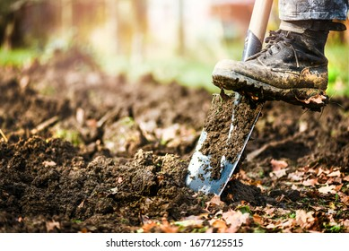 Man boot or shoe on spade prepare for digging. Farmer digs soil with shovel in garden, Agriculture concept autumn detail.