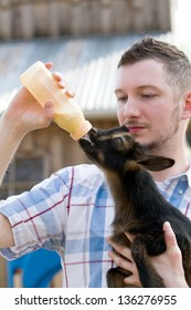 Man bottle feeds a baby Nigerian Dwarf Dairy Goat kid on a farm.