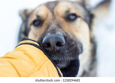 man caresses dog's head with hand
