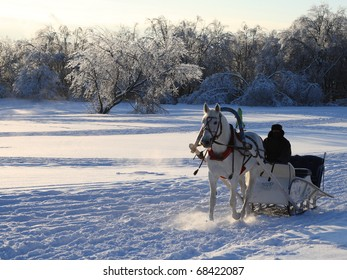man in carriage with white horse in a winter sunny day
