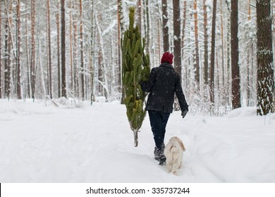 A man carries a Christmas tree in the winter forest