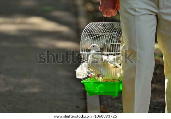 Man carries white doves in an iron cage. Horizontal view.