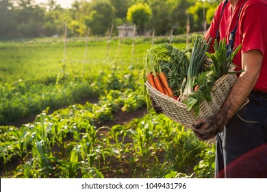 Man carrying basket full of fresh vegetables