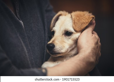 Man carrying his puppy dog, pet loving, cuddling and stroking
