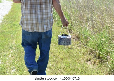 A man carrying a pail of freshly picked blackberries walks away from the camera.