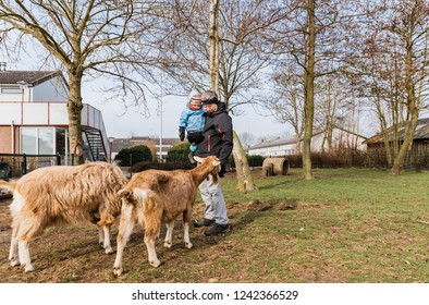 Man carrying toddler girl in petting zoo with two big goats – Hindeloopen, Netherlands, Europe
