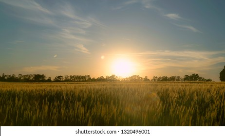 Man in casual clothes going through the field in sunset. Silhouettes male outdoors enjoy freedom and nature. Beautiful sun in sundown summer season.