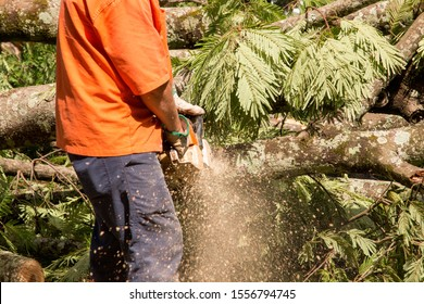 Man with a Chainsaw cutting a tree that fell during a Thunderstorm at Parque Olhos D'Agua Brasilia