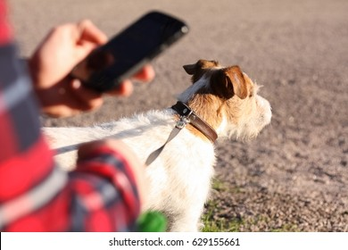 Man checking the phone while taking the dog out