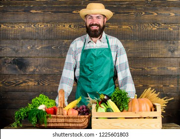 Man cheerful bearded farmer near vegetables wooden background. Farmer straw hat presenting fresh vegetables. Farmer with homegrown vegetables. Fresh organic vegetables in wicker basket and wooden box.
