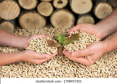 Man and child hold wooden pellets. Oak leaves and wood
