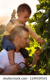 man and child in vineyards