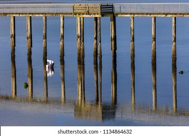 A man is clam digging in Tillamook bay in Garibaldi, Oregon.