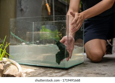 a man cleaning aquarium with green sponge