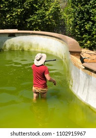 Man cleaning a dirty green pool