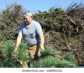 Man clearing branches and brush from a work area