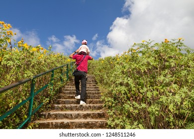 Man climbing stairs carrying his kid on the shoulders with amazing wild sunflowers background, dad and his kid in nature