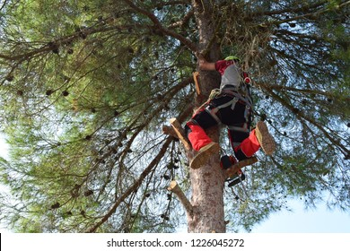 a man climbs on a tree to cut the branches at the top
