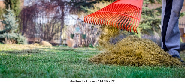 A man clogs the felt with a lawn with red plastic rags, after aeration