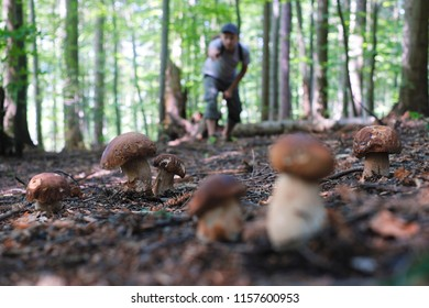 Man collect mushrooms in summer forest