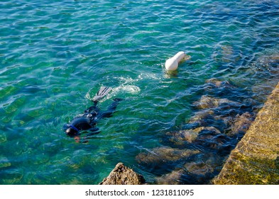 A man collects mussels in the sea of Naples, Italy. Underwater sea hunting concept.