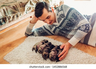 Man counting five pug dog puppies sleeping on carpet at home. Little puppies lying together on their backs