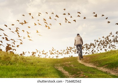Man in countryside rides bicycle on dirt road. Flock of birds (crows and doves) on the background in summer day.