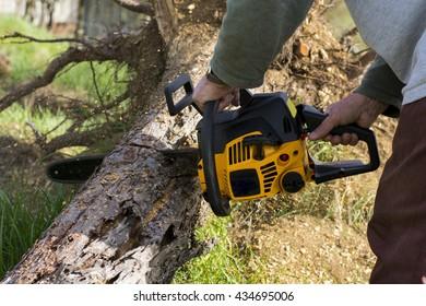 Man cuts a fallen tree in the backyard