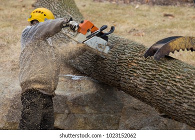 Man cuts log into smaller sections
