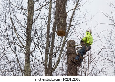 Man cuts tree with the assistance of a crane