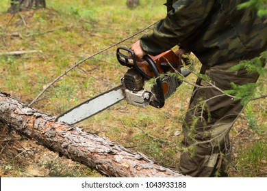 Man cuts tree with chainsaw in forest. Manufacture of the index of the direction of sanitary felling of wood in the Siberian taiga by a chainsaw.