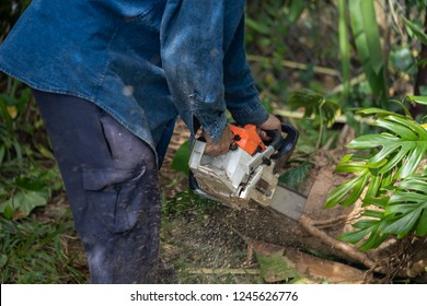 Man cuts tree felling tree with chainsaw. Occupation cut tree.