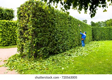 Man is cutting hedge in the park. Professional gardener in a uniform cuts bushes with clippers. Pruning garden trees. Worker trimming and landscaping green bushes. Hard work in the garden. Clipper.