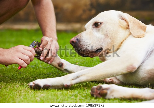 Man is cutting toenails of the dog
