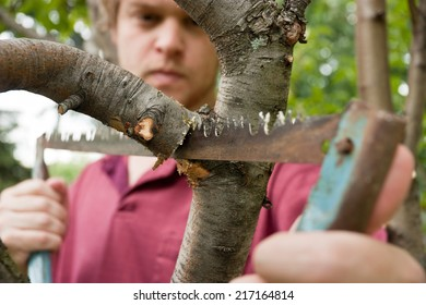 A Man Cutting A Tree Branch With A Hacksaw