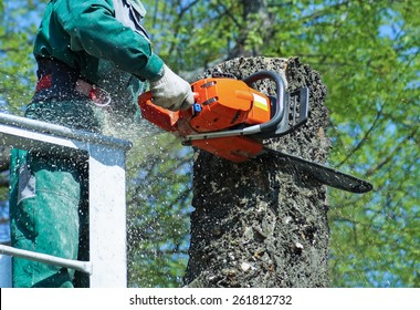 Man is cutting a tree with a chainsaw