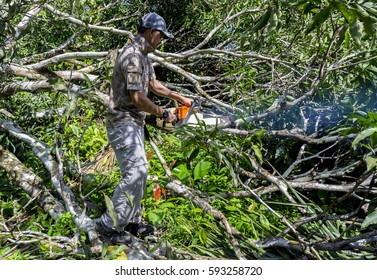 Man cutting trees using an electrical chainsaw without wearing protection equipment. Safety and hazard issue.