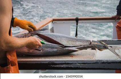 Man is cutting tuna on boat in the ocean