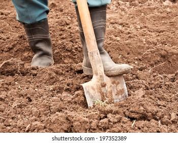 man dig a shovel in the garden