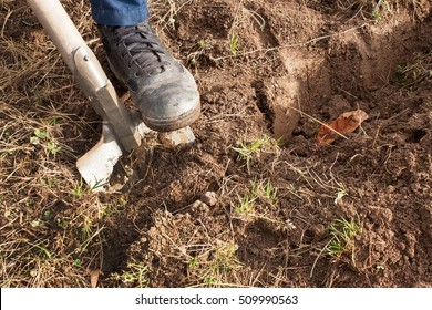 Man dig a shovel in the garden. Agricultural work. Preparing for the cultivation of vegetables.  Autumn yard work.