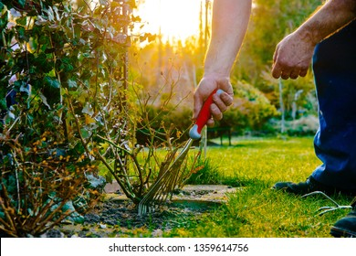 The man is digging in the garden. The concept of preparing for the allotment season, resting and relaxing in the garden. Taking care of the gardener about plants.