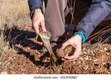 man digging the truffles. High quality photo
