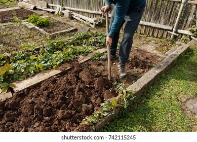 Man digging up vegetables on a garden, his legs and a spade in focus