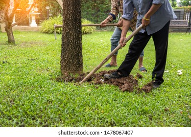 man digs a hole in the ground around  the trees
