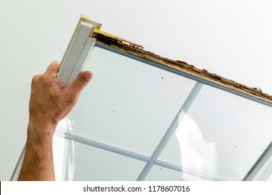 Man displaying a window damaged by wet rot in the wooden frame before replacing it in preparation for the coming winter closeup of his hand over white