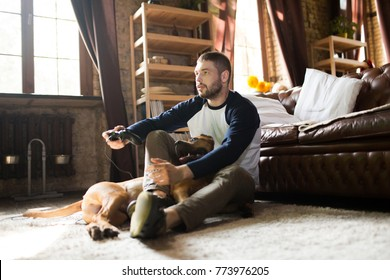 Man and dog on the floor at home. Male enjoying video game in a company with staffordshire terrier.