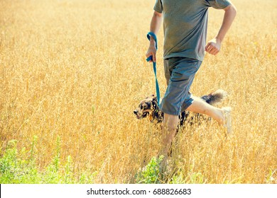 A man with the dog on a leash running in the oat field in summer