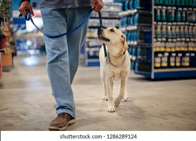 Man and dog on leash walking in hard-ware store.