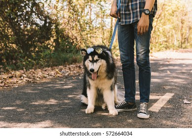 Man and A dog - Siberian huskies